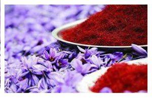 greenhouse saffron production?