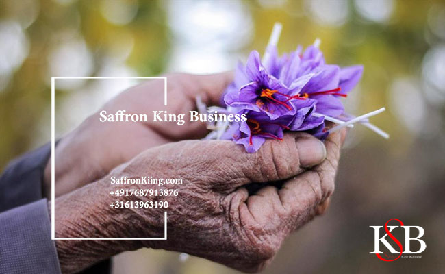 What is the time of harvesting saffron?