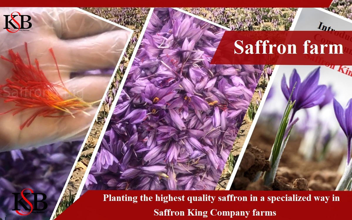 All red saffron and its price